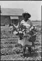 No original caption. (African-American woman picking vegetables from a garden.) - NARA - 513401.tif