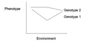 Gene–environment interaction - This norm of reaction shows lines that are not parallel indicating a gene by environment interaction. Each genotype is responding to environmental variation in a different way.