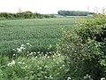 Nottinghamshire countryside - geograph.org.uk - 450316.jpg