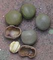Nut – KAZICHI KOTTAI 1.jpg