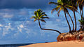 O Coqueiro e o Mar.jpg