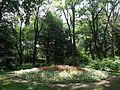 Odessa Main Botanical garden 060.jpg
