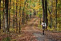 Old Natchez Trace in the Fall.jpg