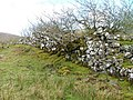 Old Wall - geograph.org.uk - 239522.jpg