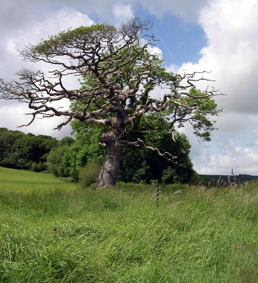 Old tree at Garron pill - geograph.org.uk - 1355222