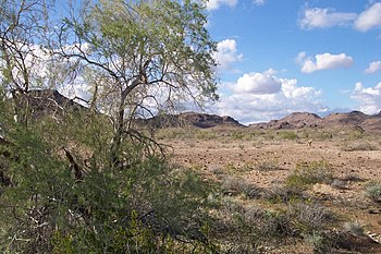 English: The Sonoran Desert near Yuma, Arizona...