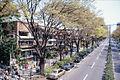 Omotesando-2000-03.jpg