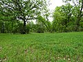 Open field in Hyland Provincial Park.jpg