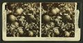 Oranges as they grow, fruit and blossoms, Manatee, Fla., U.S.A, from Robert N. Dennis collection of stereoscopic views 2.png