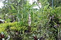 Orchid Gardens Bali, Indonesia - panoramio (10).jpg