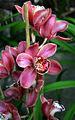 Orchids (868228793).jpg