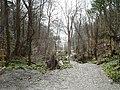Orielton Wood looking down to Porth Aberamffra, Abermaw - geograph.org.uk - 580701.jpg
