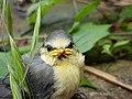 Original angry bird.jpg