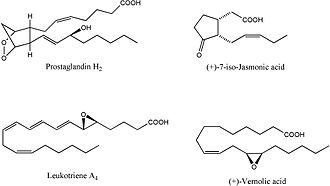 Oxylipin - The structural formulae of selected oxylipins