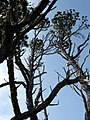 Pacific Rim National Park - Bog Trail (3670708523).jpg
