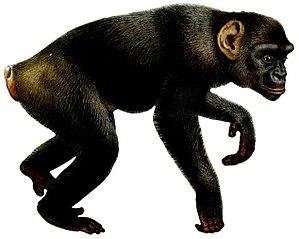 Primate - 50 px