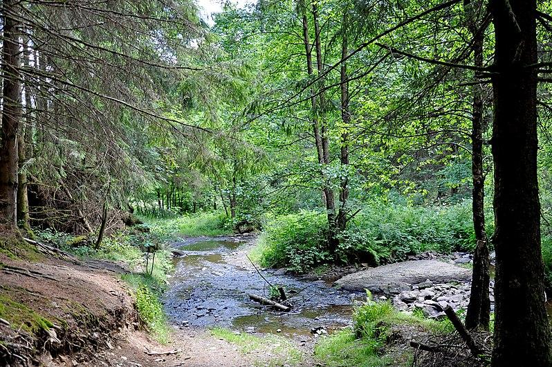 Parc naturel des deux ourthes06.jpg