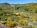 Parque Natural de Montesinho Porto Furado trail (5732588915).jpg