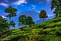 Patenggang Lake 03.jpg