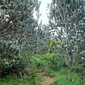 Path - Silvertree forest - Table Mountain CT2.jpg
