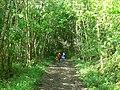Path by Lindley Wood Reservoir - geograph.org.uk - 176474.jpg