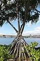 Pearl Harbor, Honolulu - panoramio (10).jpg