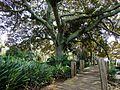 Pearson Conservatory Port Elizabeth-008.jpg