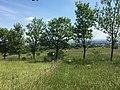 Perchtoldsdorfer Heide, Bild 14.jpg