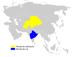 Phylloscopus griseolus distribution map - es.png