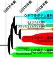 Phylogeny of Cactaceae.png