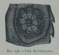 Picture Natural History - No 236 - The Botryllus.png