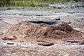 Pink Cone Geyser (13 July 2014) 3 (15324122761).jpg