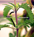 Plant nodes B.jpg