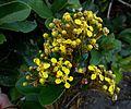 Planta de flores amarelas.jpg