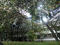 Plantas cubiertas, ICN, Universidad Nacional.JPG