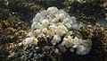 Poipu Beach, Koloa (502991) (16801334150).jpg