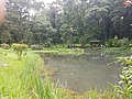 Pond View 20170706 160154.jpg