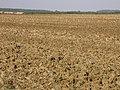 Prairieisation - geograph.org.uk - 49346.jpg