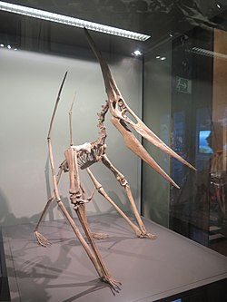 Pteranodon model in Vienna.jpg