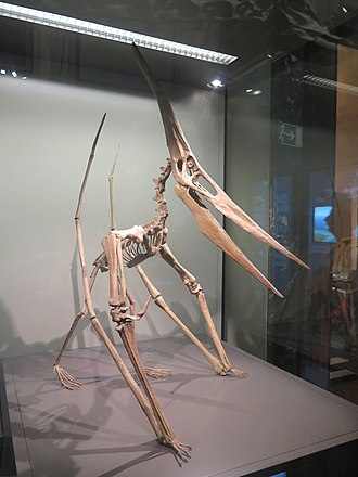 Pteranodon - Reconstructed P. longiceps skeleton in a quadrupedal posture