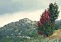 Puebla de la Sierra 1975 13.jpg