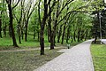 Pyatigorsk Mashuk the way in the forest.jpg