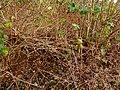 Quarry Moor (93).JPG