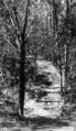 Queensland State Archives 101 Paths constructed by Sir Thomas Herbert John Chapman Goodwin in the grounds of Government House Fernberg Road Paddington Brisbane c 1930.png