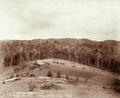 Queensland State Archives 2392 C M Nothlings vineyard and homestead Teutoberg Blackall Range c 1899.png
