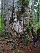 Forest River Surveyor Krets King Bed