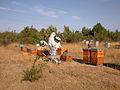 Récolte du miel au rucher.JPG