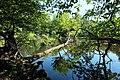 Réserve naturelle régionale des étangs de Bonnelles le 26 mai 2017 - 59.jpg
