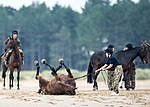 RHA Equestrian Exercise in Norfolk MOD 45163008.jpg