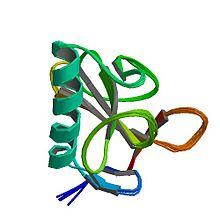 RNase-T1 pdb 1ygw.jpg